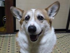 しんちゃん11歳の笑顔