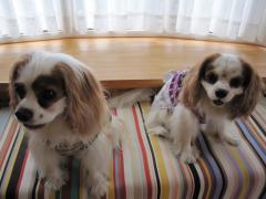 リッキー&リンちゃん
