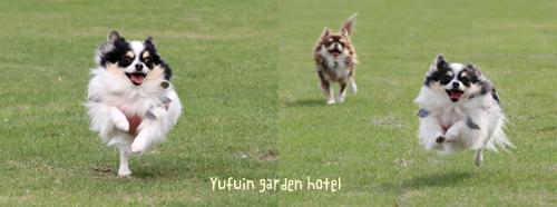dogrun-051302.jpg