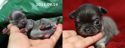nene-birth.jpg