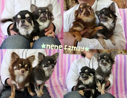 nene-family-2.jpg