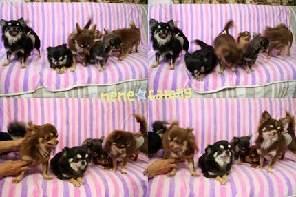 nene-family2.jpg