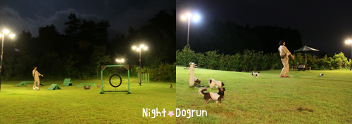 night-dogrun.jpg