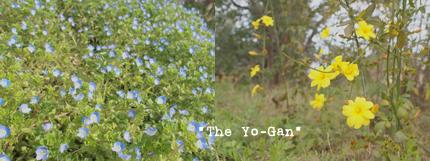 yo-gan-1.jpg