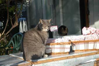 bussyokucyu cat