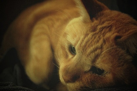 cat00.jpg