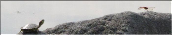 亀とトンボ