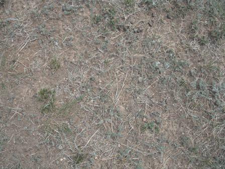 grass_surface