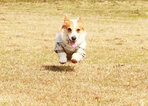 楽しそうな飛行犬(笑)