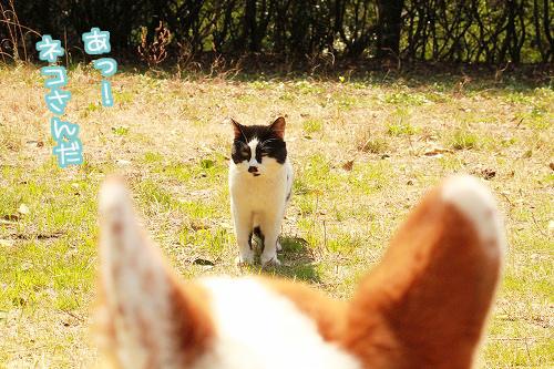 ネコさんだ