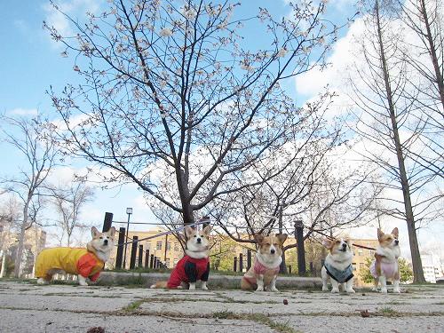 桜の前でパチリ☆