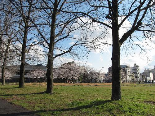 桜が満開~