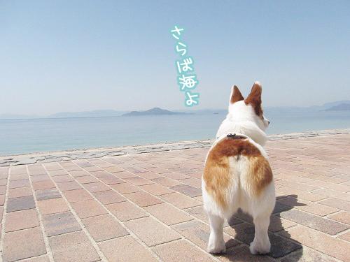 さらば海よ