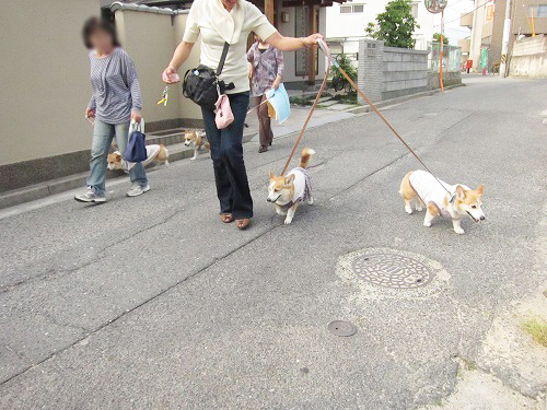 みんなでお散歩~♪