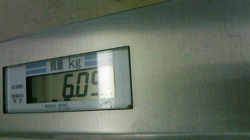 6キロこえました