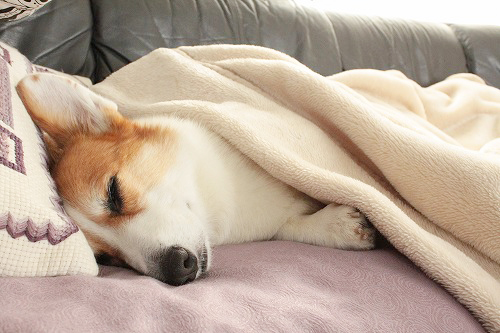 可愛く寝ています