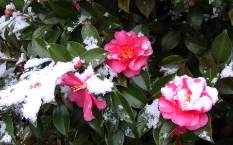 20101231雪化粧