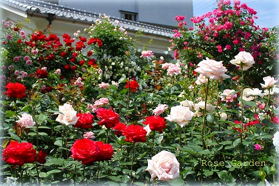 北川さんの庭