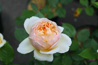 北川さん庭5