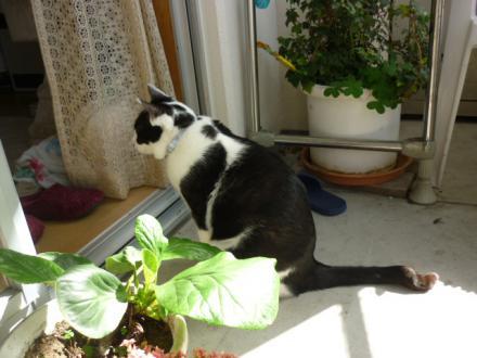 春の猫014