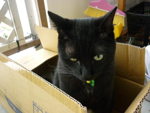 箱の中のニーぽん001