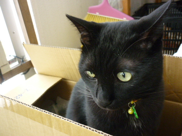 箱の中のニーぽん003