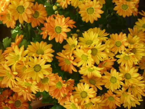秋の庭015