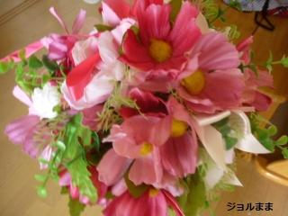 9月の花コスモス