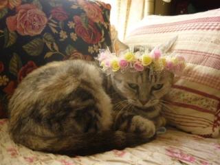 花冠タバサ1