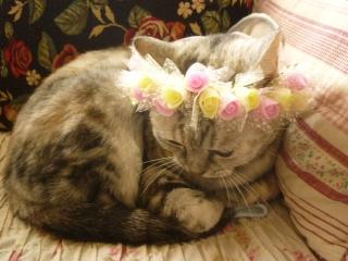 花冠のタバサ