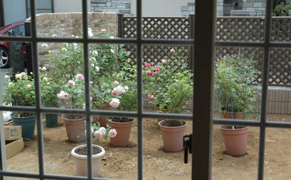 新しいお庭