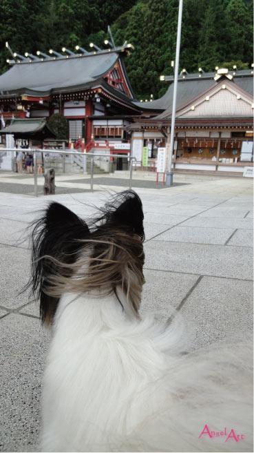 ooyama2012-10.jpg