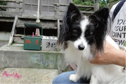 ooyama2012-14.jpg