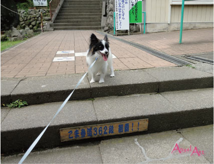 ooyama2012-2.jpg