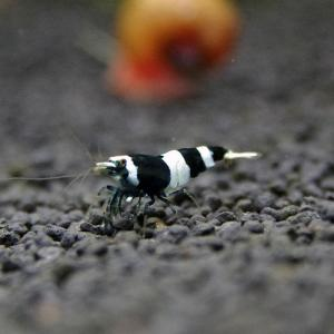 black-panda03.jpg