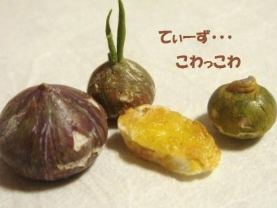 ラスク〔旧〕チーズ・かぼちゃ達