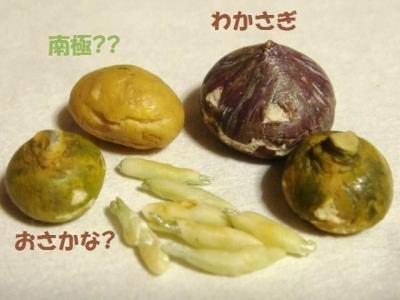 わかさぎの天ぷら・かぼちゃ達②