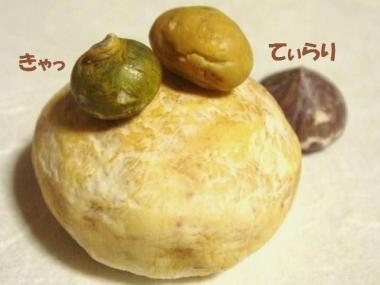 玄米ぱん〔特大〕+かぼちゃ達