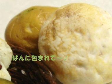 玄米ぱん〔特大〕+かぼちゃ達②