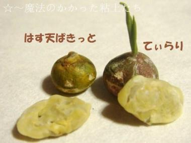 天ぷら〔はす〕かぼちゃ達