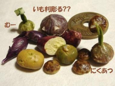 野菜たち〔3種・生〕玄米パンの器。かぼちゃ達②◎