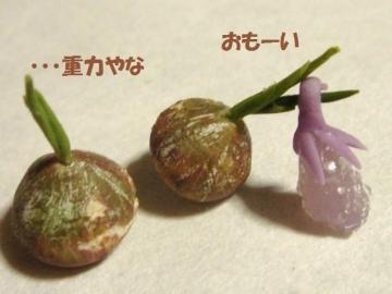 和菓子〔初なす〕かぼちゃ達