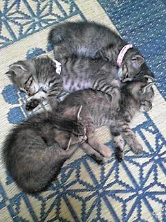 子猫4匹で