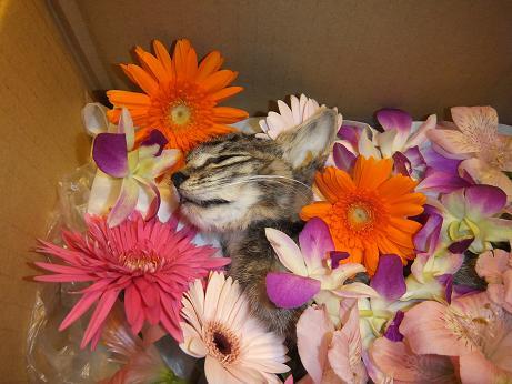 サンゴ お花に囲まれて
