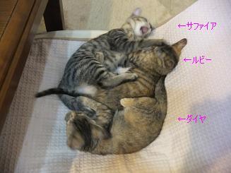 三つ巴の戦い