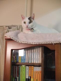 本棚の上から見物