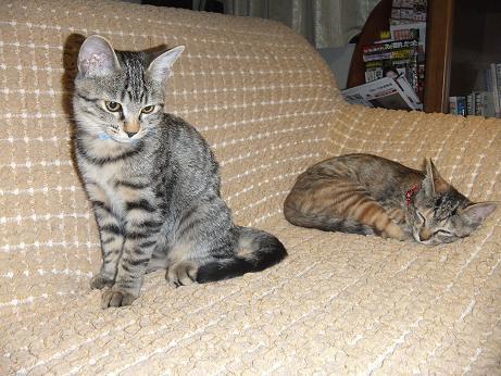 サファイアとルビー ソファーで