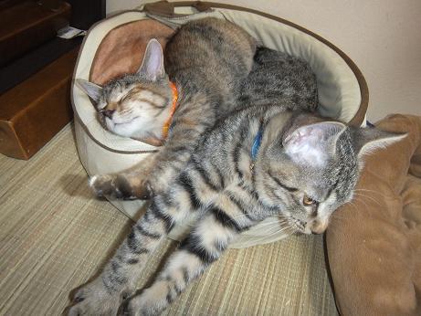 猫ベッドでpart2