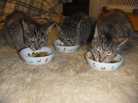 3匹で最後の晩餐2