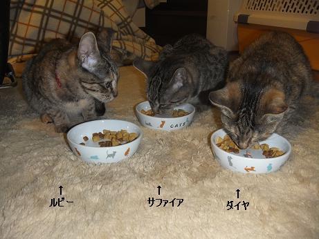 3匹で最後の晩餐1